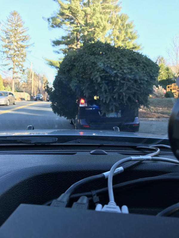 Dashcam footage from the Sudbury, MA police shows a small car with a massive Christmas tree tied to its roof